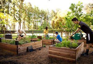 ucla-garden