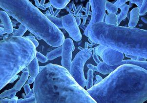 Closeup of microbes