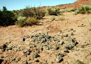 Fossilized titanosaurs eggshells
