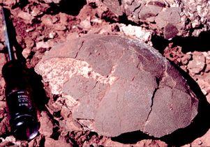 Titanosaur eggs