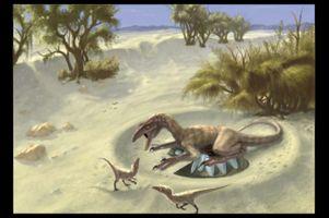 Oviraptorid theropods