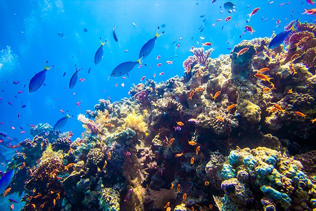 Underwater reef photo Temple, Red Sea