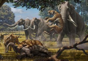 Violent attacks in the Pleistocene