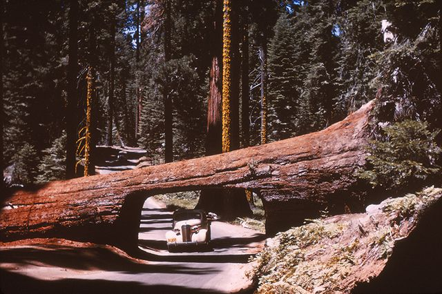 """planting a sequoia commentary Planting a sequoia commentary  topics: tree,  """"planting a sequoia"""" is a dramatic monologue, written in blank verse that leads readers through the thoughts and journey of a man who has experienced the death of his infant son."""