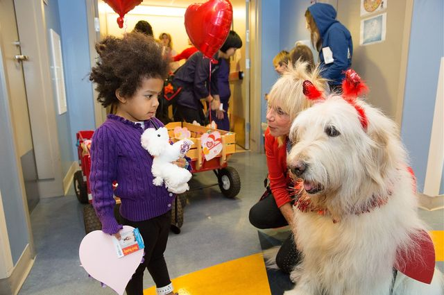 Volunteer dogs deliver Valentines