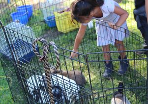 A child at the petting zoo