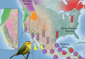 Map shows population-specific migratory flyways for Wilson's warbler