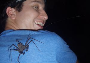 Kenneth Chapin whip spider