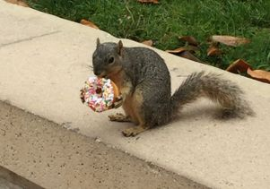 Squirrel with a donut