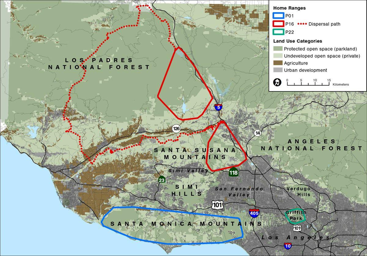 Griffith Park Los Angeles Map.Los Angeles Is A Metropolitan Den For Mountain Lions Ucla