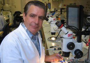 Edward De Robertis in his lab