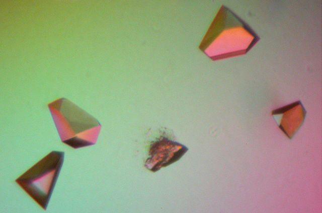 MicroED sample