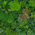 Aerial image of forest