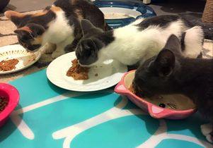 Kittens eating in a row