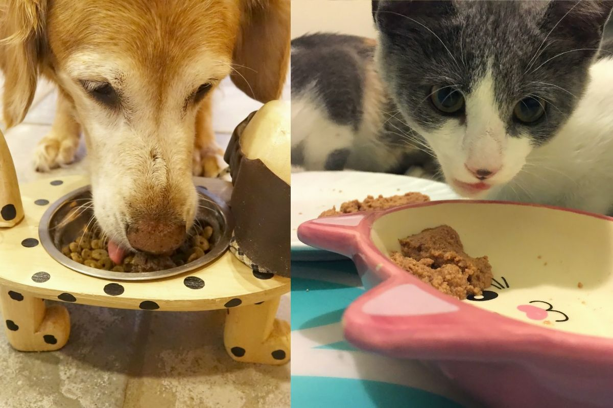 Dog and cat eating pet food
