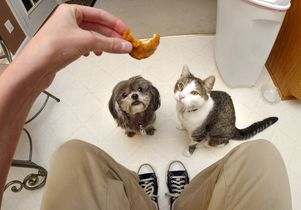 Dog and cat beg for food