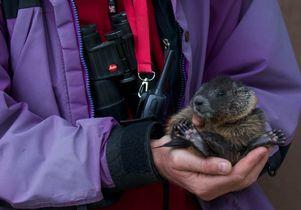 Daniel Blumstein photo holding marmot
