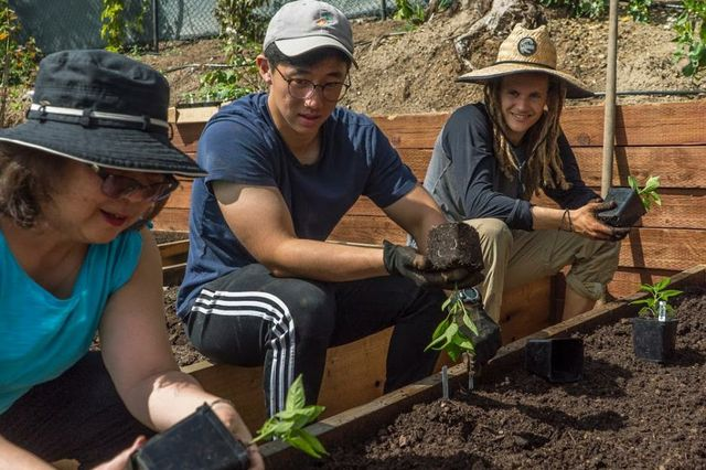 Community gardens at UCLA