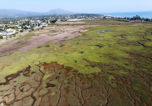 Carpinteria Salt Marsh Reserve