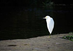 Los Angeles River fauna