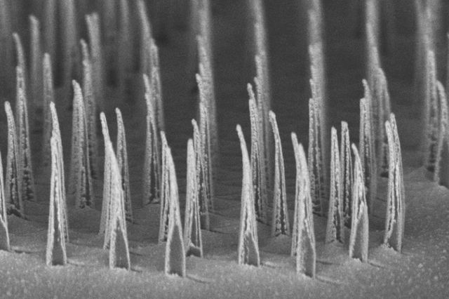 Nanospear forest