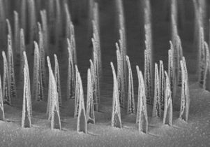 Image shows an array of nanospears before being released for delivery of genetic information to cells.