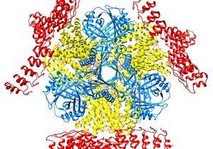 Molecular scaffolding