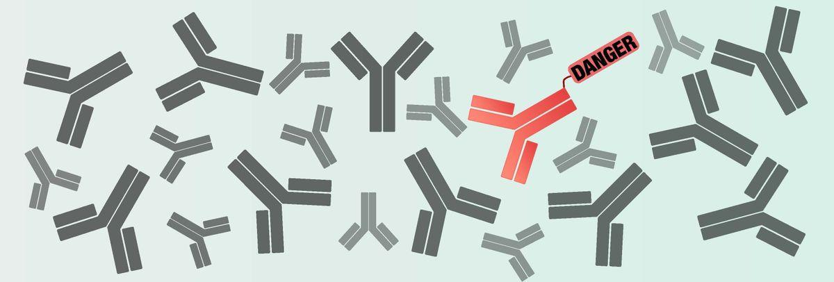 Y-shaped antibodies