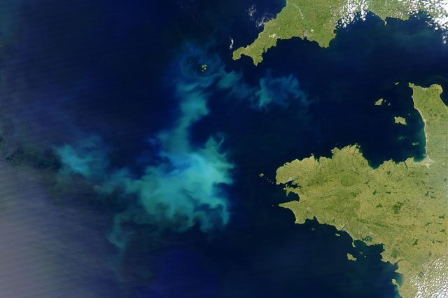 Bloom of coccolithophores visible from space