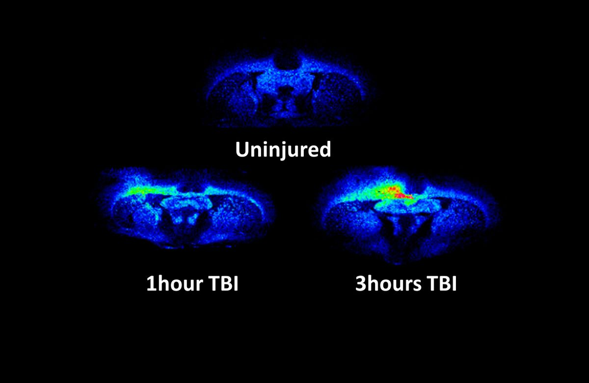 Traumatic brain injury in rats