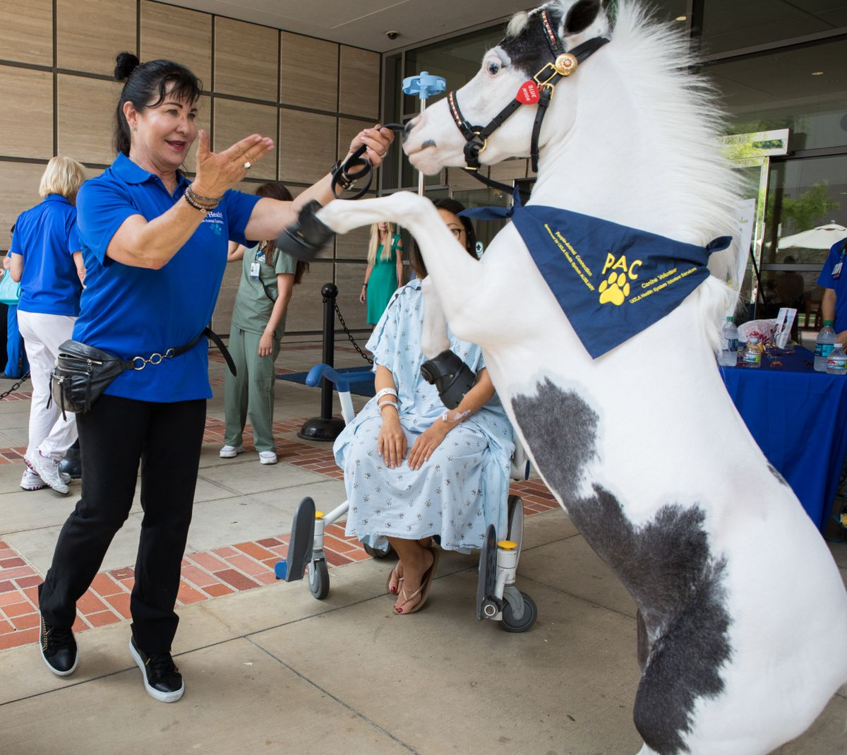 Mini Horse Charms Patients Families And Staff Ucla