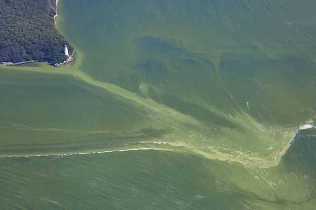 Harmful algal bloom NOAA