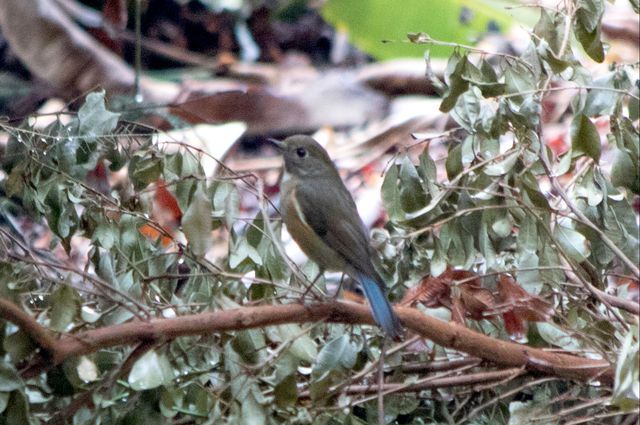 Bird at Clark