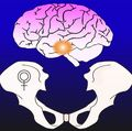 Brain and bone graphic