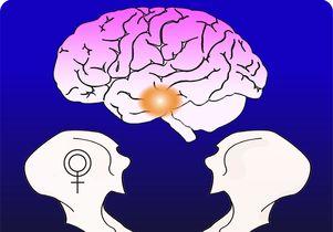 Brain and bone graphic
