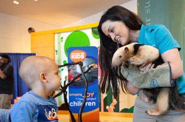 UCLA Mattel and San Diego Zoo - Tamandua