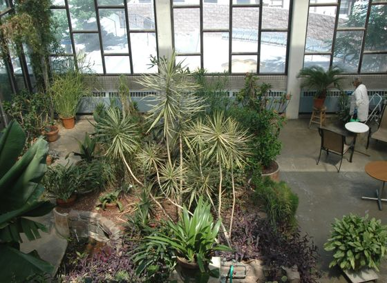 UNM Biology Greenhouse