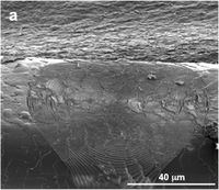 Etching on hair strand