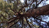 Tree Taos