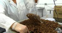 Volunteers pack cereal at Roadrunner Food Bank