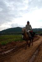 Mattison on horse
