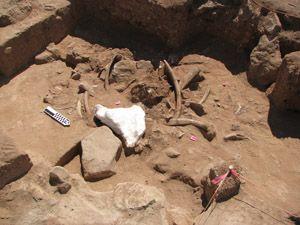 Mammoth bones in situ