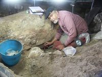 Lawrence Straus excavating in El Miron cave in Spain in 2010.