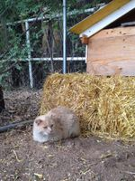 UNM cat at Mandy's Farm