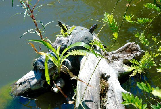 Duck Pond Sliders