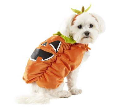 Pumpkin Pet Costume - $10- $14