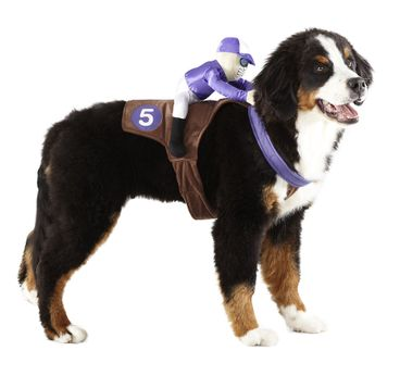 Jockey Pet Costume - $13