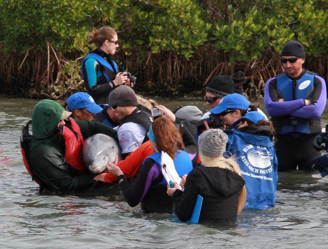 Dolphin Disentanglement 11/20/2014