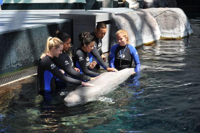 Beluga and Friends Interactive Program
