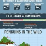 CARING TOGETHER_African Penguins Infographic(2)_small